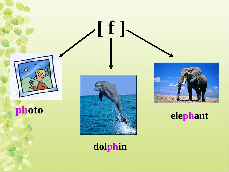 [ f ] photo dolphin elephant
