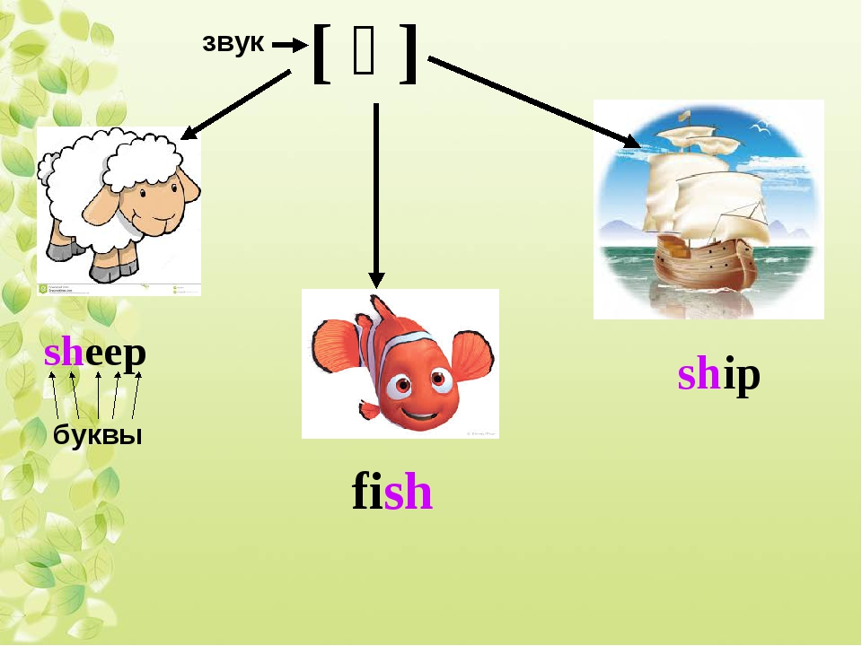 [ ʃ ] sheep fish ship звук буквы