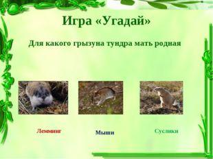 Игра «Угадай» Для какого грызуна тундра мать родная Лемминг Мыши Суслики