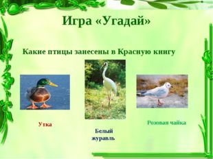 Игра «Угадай» Какие птицы занесены в Красную книгу Утка Белый журавль Розовая