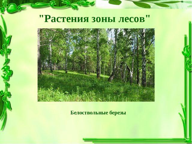 """""""Растения зоны лесов"""" Белоствольные березы"""