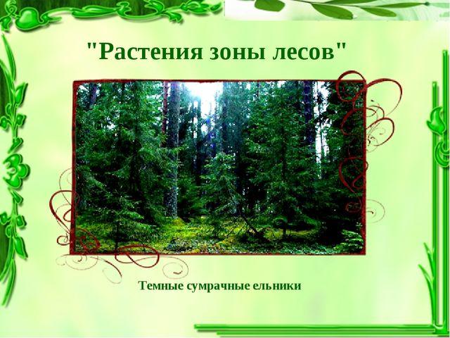 """Темные сумрачные ельники """"Растения зоны лесов"""""""