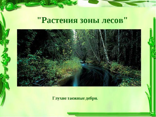 """""""Растения зоны лесов"""" Глухие таежные дебри."""