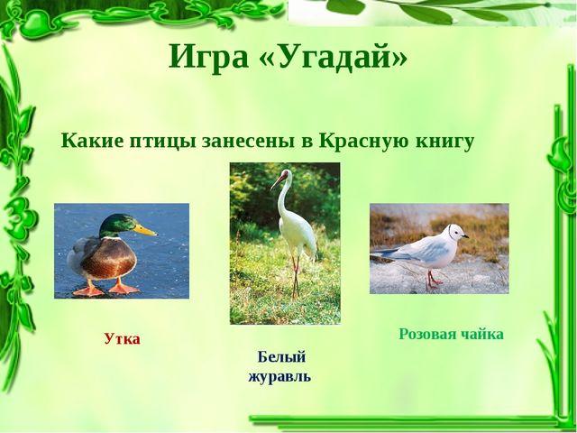 Игра «Угадай» Какие птицы занесены в Красную книгу Утка Белый журавль Розовая...