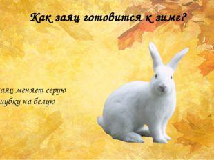 Как заяц готовится к зиме? Заяц меняет серую шубку на белую