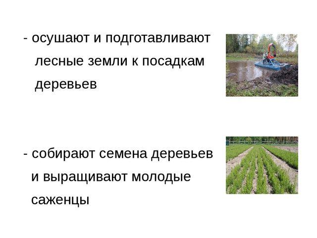 - осушают и подготавливают лесные земли к посадкам деревьев - собирают семен...