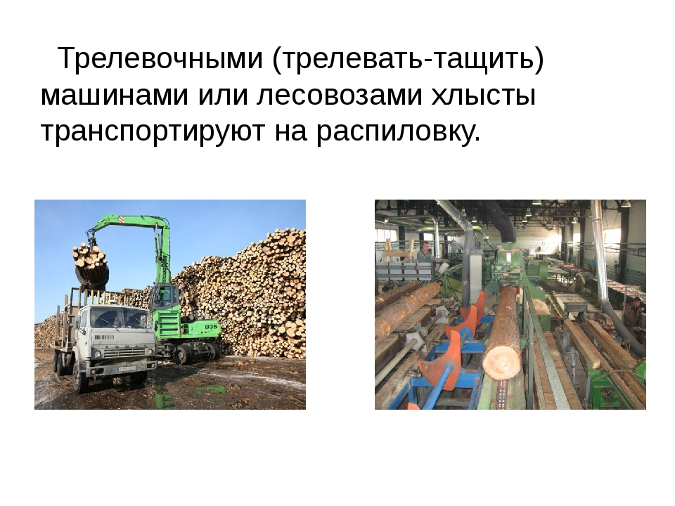 Трелевочными (трелевать-тащить) машинами или лесовозами хлысты транспортирую...