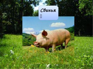 Свинья́