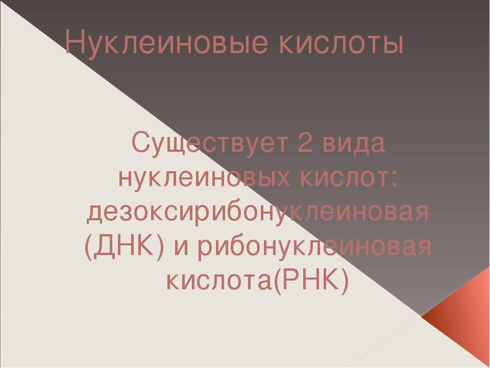 Нуклеиновые кислоты Существует 2 вида нуклеиновых кислот: дезоксирибонуклеино...