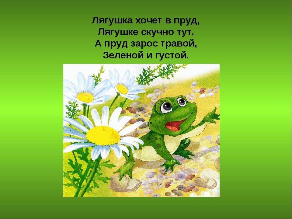 Лягушка хочет в пруд, Лягушке скучно тут. А пруд зарос травой, Зеленой и гус...