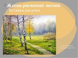 Жизнь растений весной Подготовила Пузырникова Т.А.