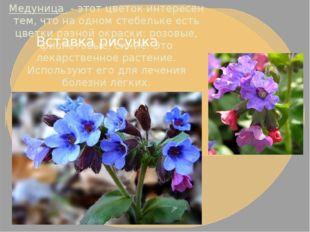 Медуница- этот цветок интересен тем, что на одном стебельке есть цветки раз