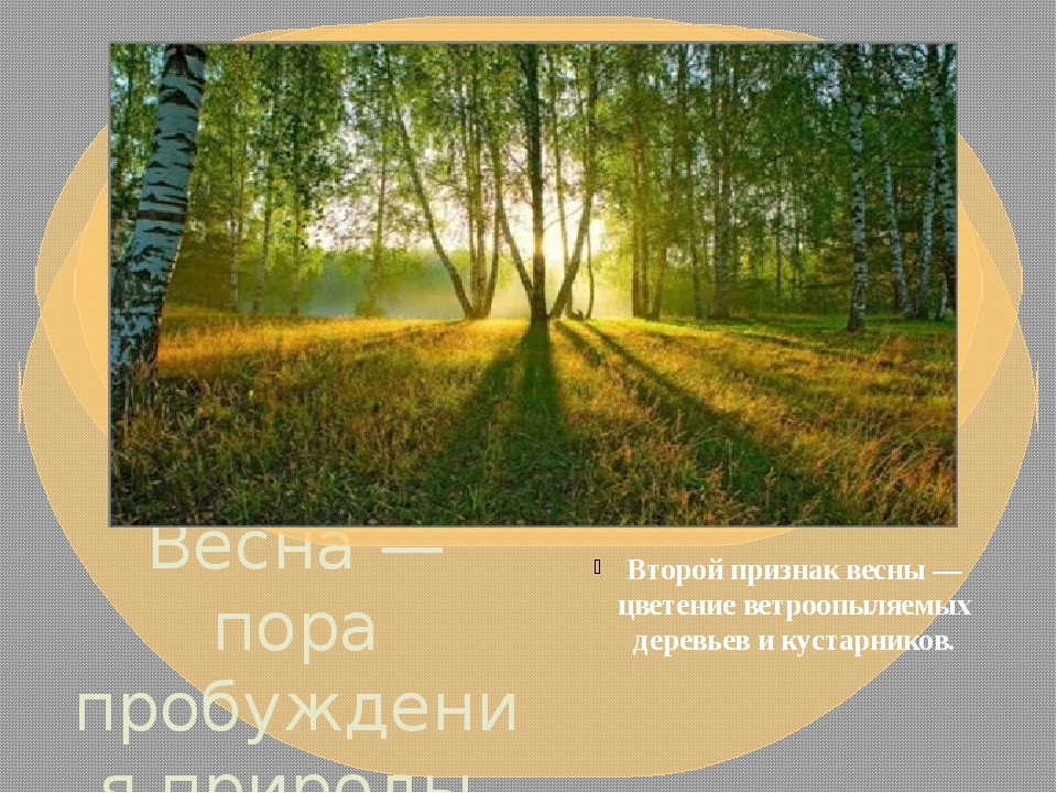 Весна — пора пробуждения природы. По календарю весна начинается 1 марта. В пр...