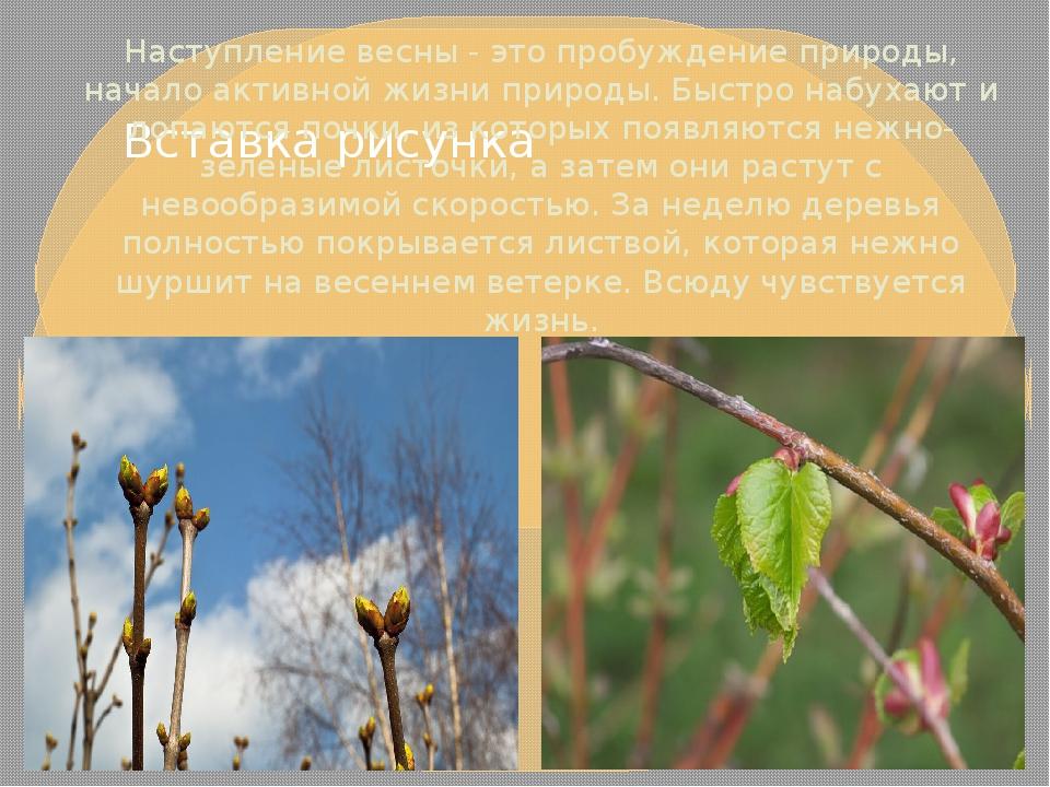Наступление весны - это пробуждение природы, начало активной жизни природы. Б...