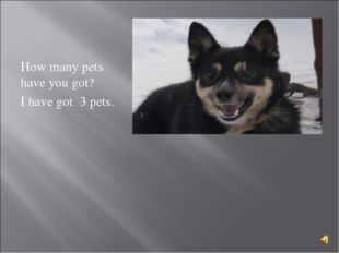 How many pets have you got? I have got 3 pets.