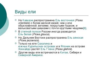 Виды ели На Кавказе распространена Ель восточная (Picea orientalis) с более м