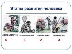 Австралопитек Человек умелый Неандерталец Кроманьонец 4 1 2 3 Этапы развития