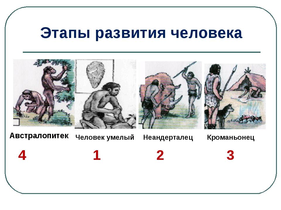 Австралопитек Человек умелый Неандерталец Кроманьонец 4 1 2 3 Этапы развития...