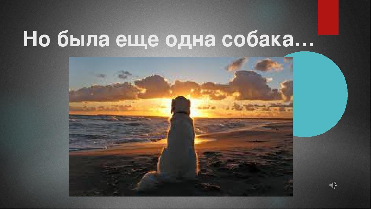 Но была еще одна собака…