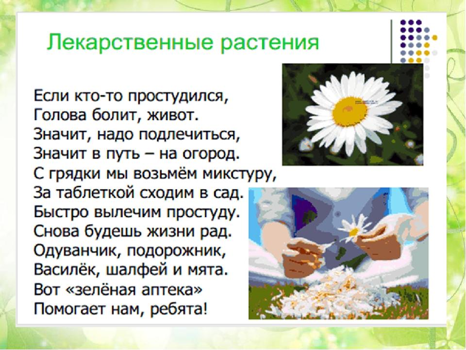 Стих о лекарственном растении ромашка