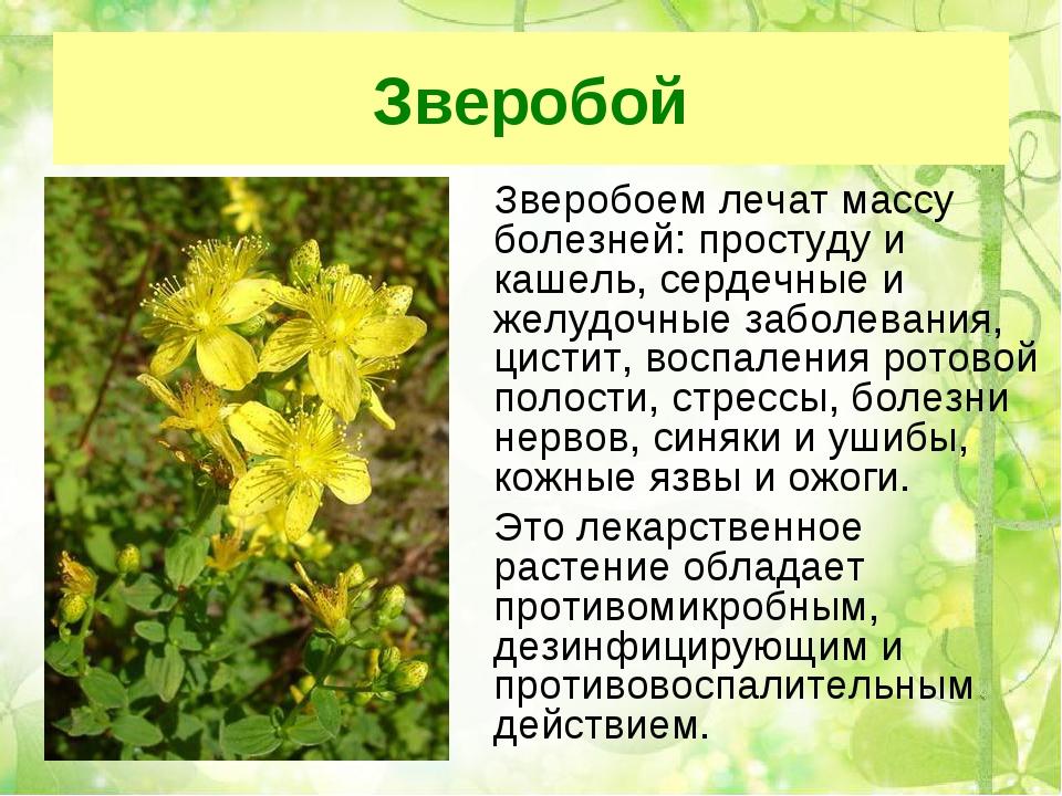 картинки презентации лекарственные растения что