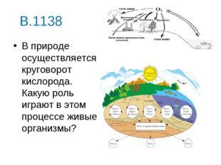 В.1138 В природе осуществляется круговорот кислорода. Какую роль играют в это