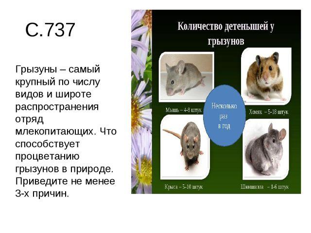 С.737 Грызуны – самый крупный по числу видов и широте распространения отряд м...