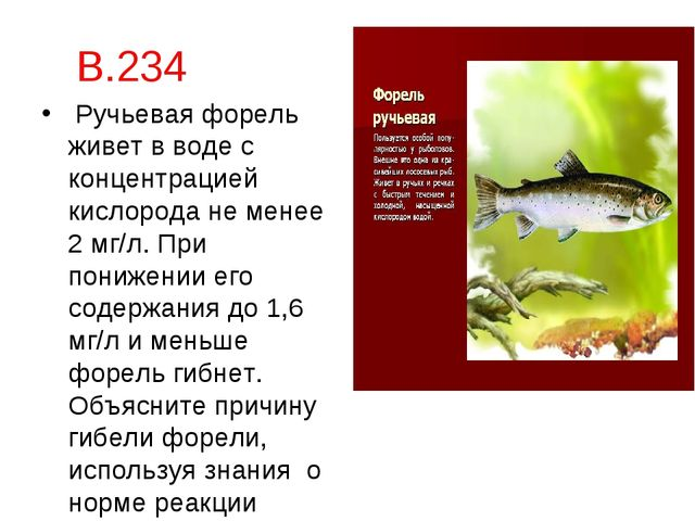 В.234 Ручьевая форель живет в воде с концентрацией кислорода не менее 2 мг/л....
