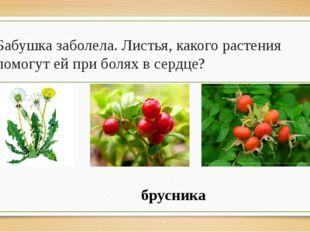Бабушка заболела. Листья, какого растения помогут ей при болях в сердце? брус