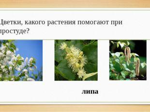 Цветки, какого растения помогают при простуде? липа