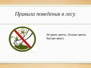Правила поведения в лесу. Не рвать цветы. Лесные цветы быстро вянут.