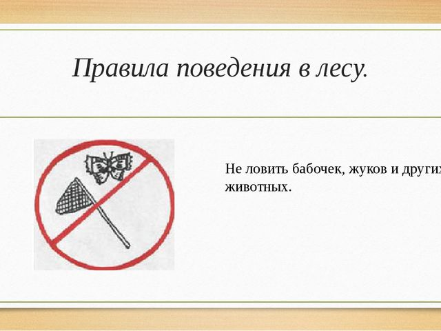 Правила поведения в лесу. Не ловить бабочек, жуков и других животных.