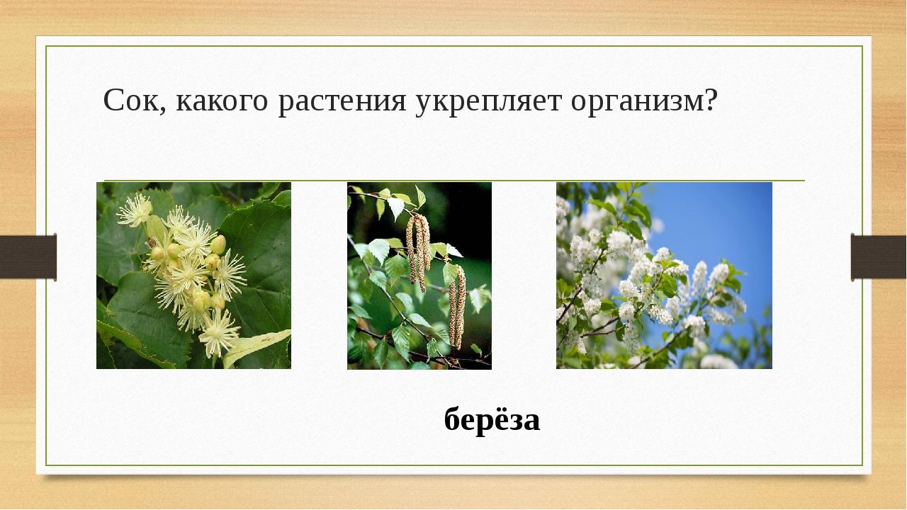 Сок, какого растения укрепляет организм? берёза