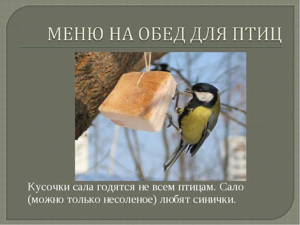 Кусочки сала годятся не всем птицам. Сало (можно только несоленое) любят син...