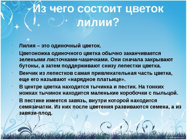 Из чего состоит цветок лилии? Лилия – это одиночный цветок. Цветоножка одиноч...