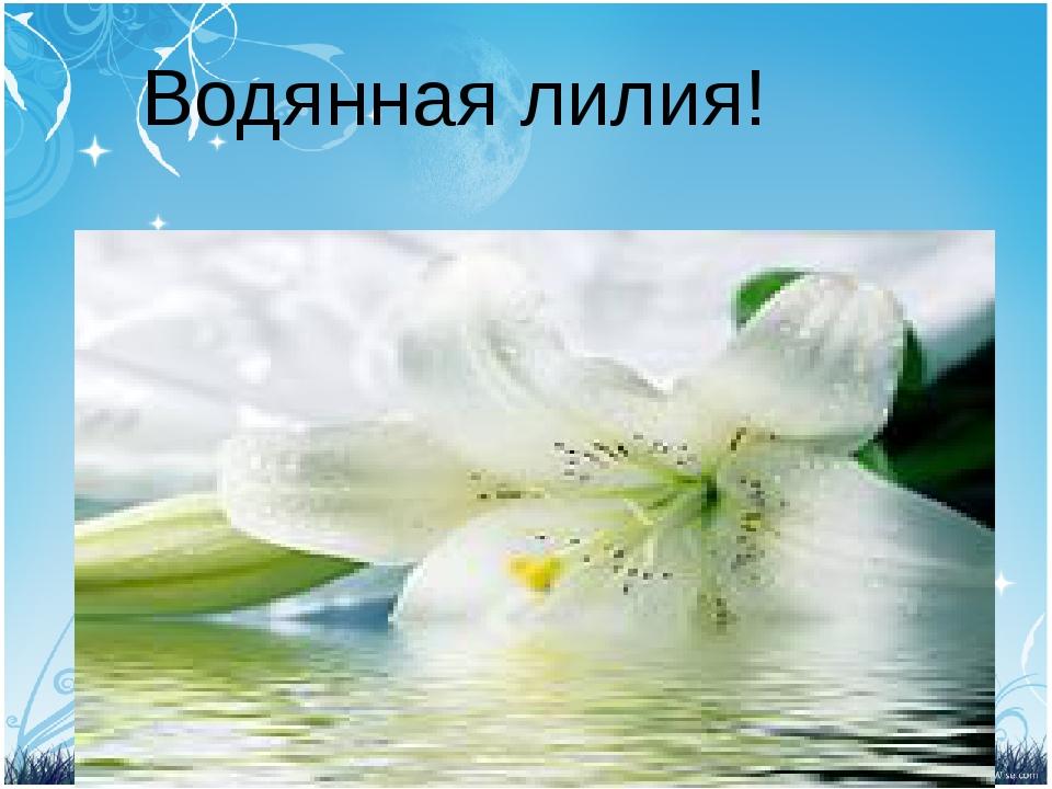 Водянная лилия!