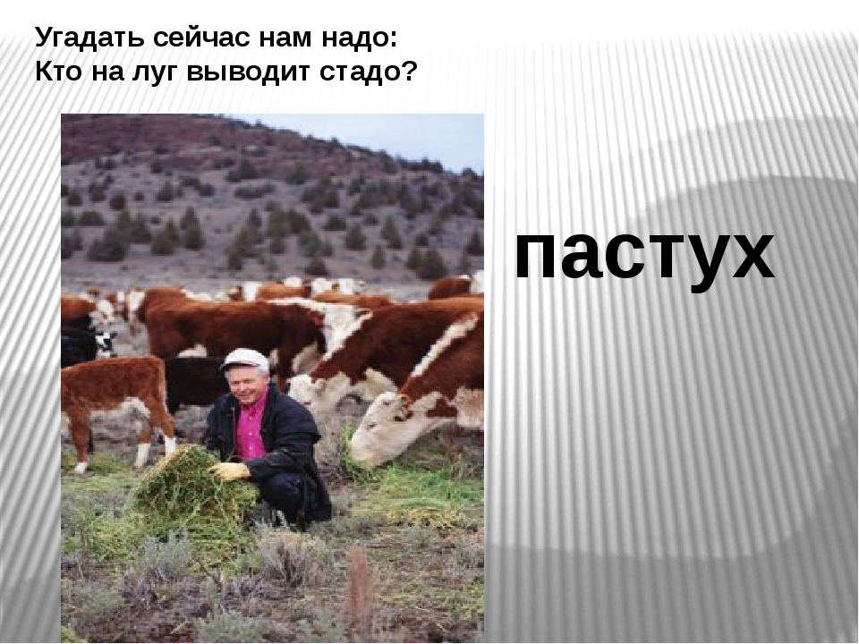 Угадать сейчас нам надо: Кто на луг выводит стадо? пастух