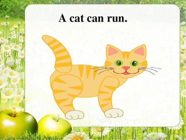 A cat can run.