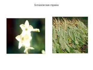 Ботаническая справка