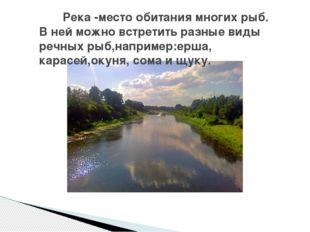 Река -место обитания многих рыб. В ней можно встретить разные виды речных ры