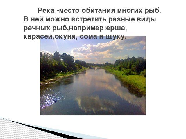 Река -место обитания многих рыб. В ней можно встретить разные виды речных ры...