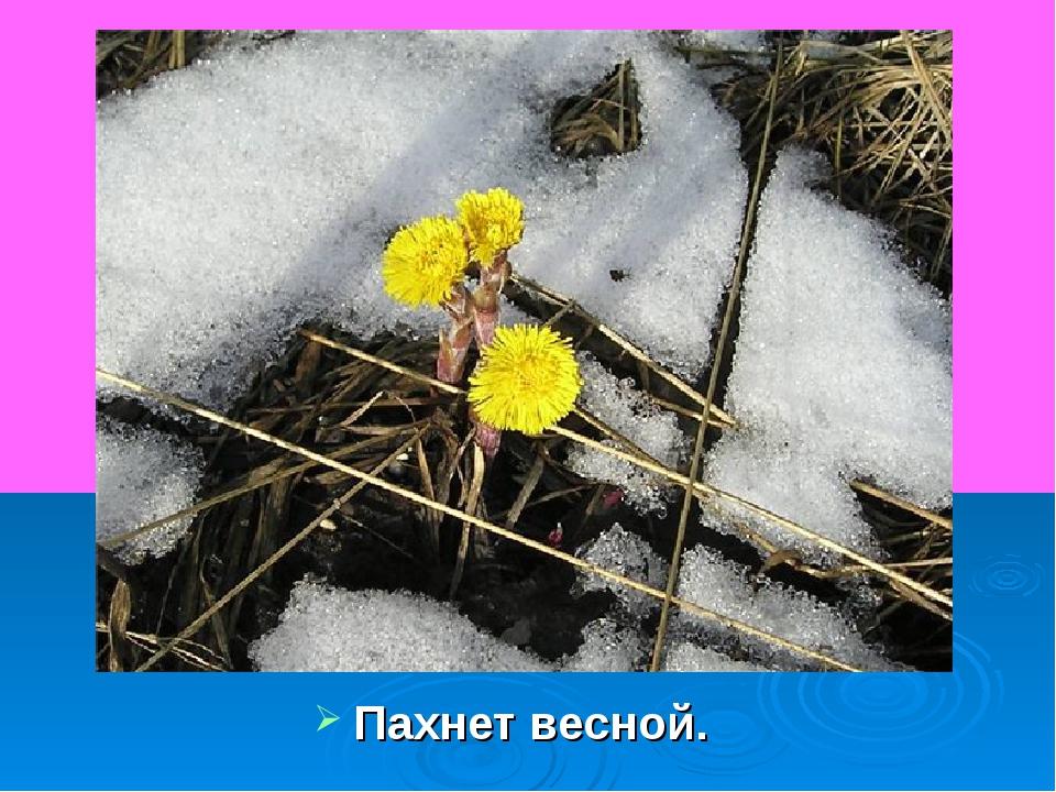 Пахнет весной.