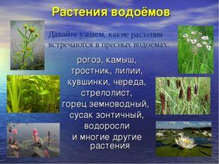 Растения водоёмов рогоз, камыш, тростник, лилии, кувшинки, череда, стрелолист