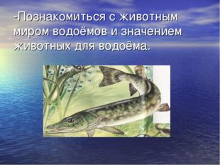 -Познакомиться с животным миром водоёмов и значением животных для водоёма.