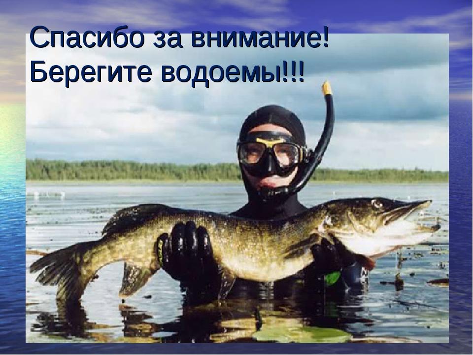 Спасибо за внимание! Берегите водоемы!!!