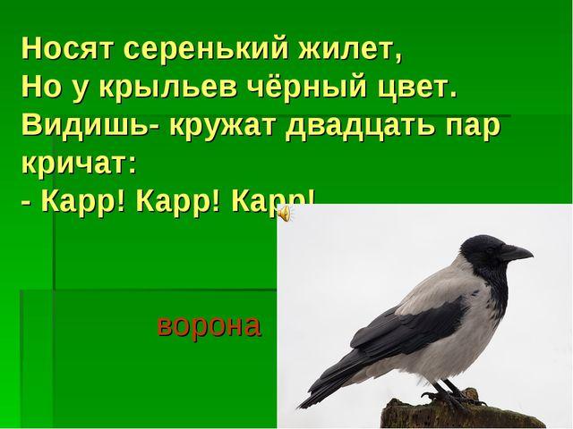 Носят серенький жилет, Но у крыльев чёрный цвет. Видишь- кружат двадцать пар...