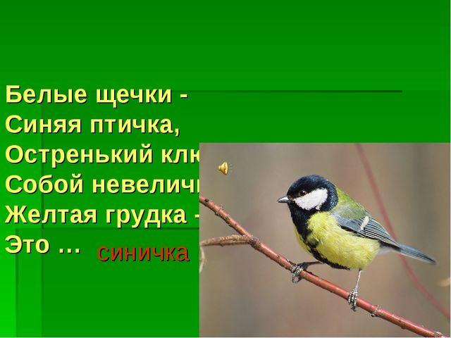 Белые щечки - Синяя птичка, Остренький клювик - Собой невеличка. Желтая грудк...