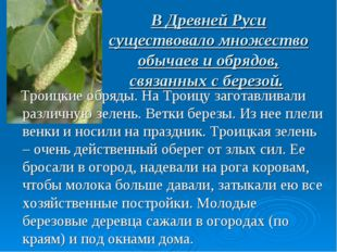 В Древней Руси существовало множество обычаев и обрядов, связанных с березой.