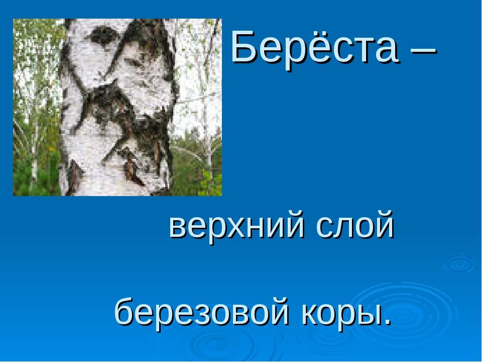 Берёста – верхний слой березовой коры.