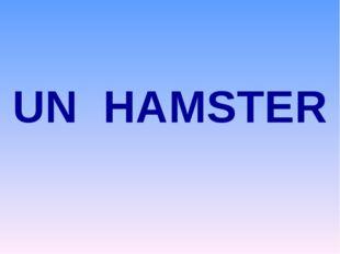 UN HAMSTER